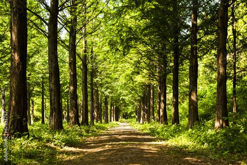 fototapeta na ścianę Szlak oświetlenie Drzewo