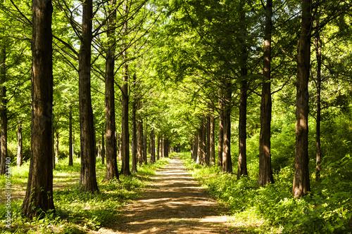 szlak-wokol-oswietlone-naslonecznione-drzewa
