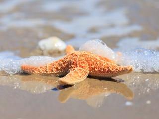 Instant - Seestern Am Meer
