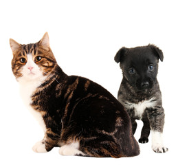 Cat and cute puppy isolated on white