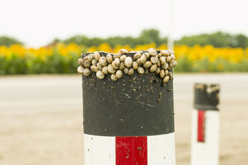 Snails on road sign - Stock Image macro.