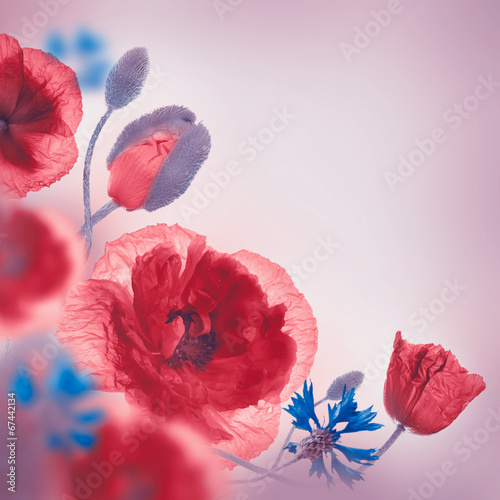 Foto op Canvas Poppy Red poppies field and blue cornflowers, floral background