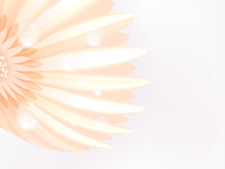 Water drops on elegant gerbera petals. plus EPS10