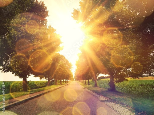 canvas print picture Warm sun on a alley in Stuttgart Hohenheim