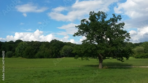 canvas print picture Baum Landschaft
