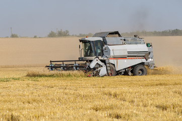 Combine harvester works in the field