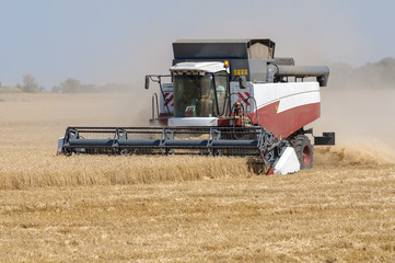 Mechanized harvesting wheat grain harvester