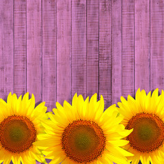 sunflower leaning on pink wooden background