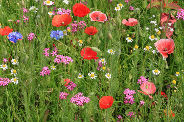a lot of flowers on meadow