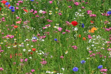 flowers on a meadow at summer