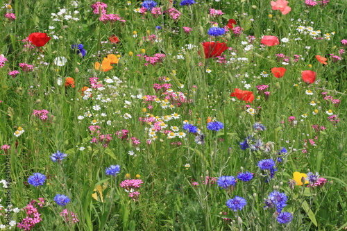 view on flowers on a meadow