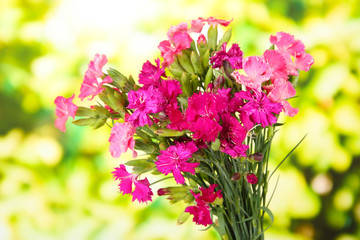 Bouquet of carnations, on bright background