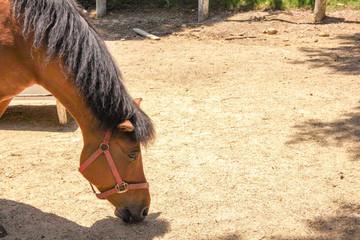 食事中の馬2