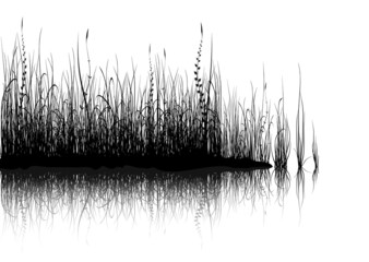 Grass - isolated on white