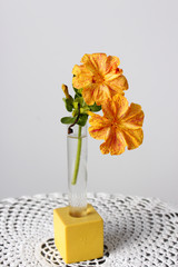 Dos flores amarillas, Don Pedro en un florero