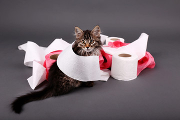 Cute kitten playing with roll of toilet paper,