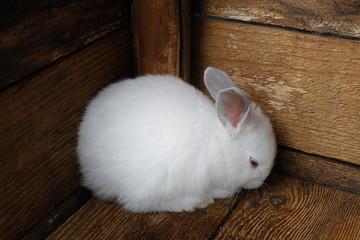 Little rabbit cornered.