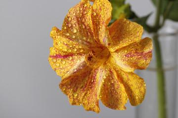 Flor primer plano