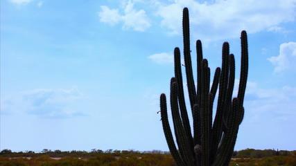 Cactus timelapse 01