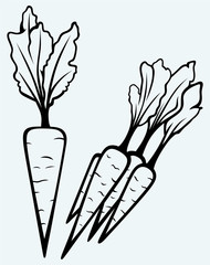 Carrot vegetable with leaves