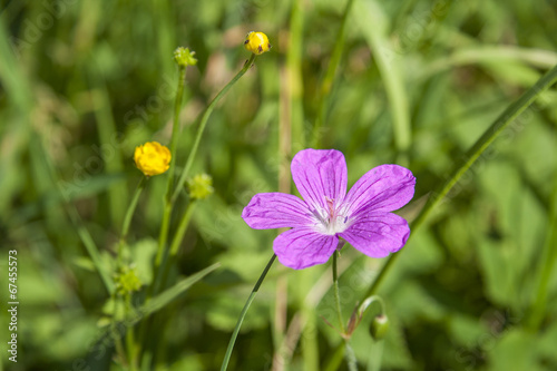 canvas print picture Flower OnThe Field