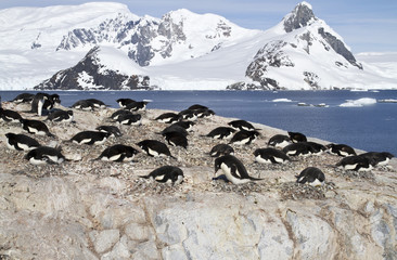 Adelie penguin colony on the rocks of one of the Antarctic islan