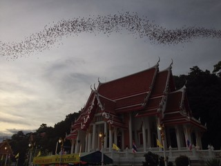 Million of Bats in Thailand