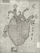 Постер, плакат: Сердце