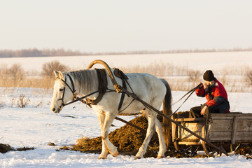 man with horse sledge outdoor