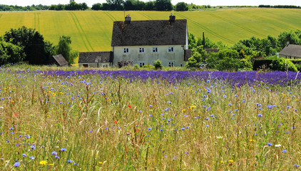 Wild Flower Meadow in France
