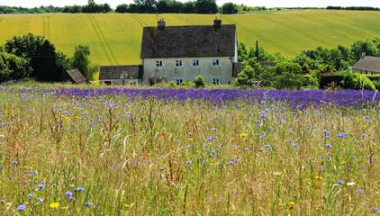 Wild Flower Meadow in France