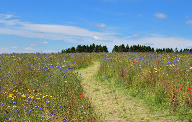 Wild Flower Meadow in England
