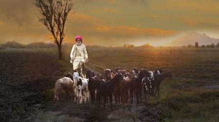Animal Herding