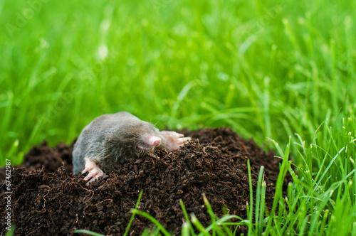 Mole in the hole