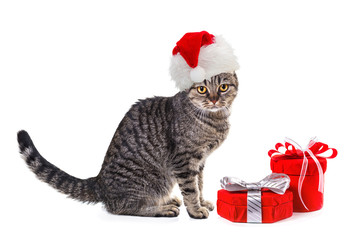 Cat  in Santa Claus xmas red hat with gifts. Isolate on white ba