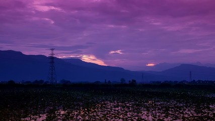 HD Time lapse Lotus pond evening sunset  tilt down
