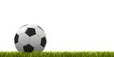 Fototapety pallone da calcio su prato