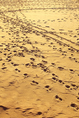 landscape view on footprints at sandy beach