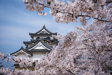 Hikone Castle in the Spring
