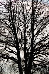 Äste eines Baumes