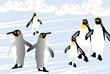 ペンギンの氷の国のお散歩