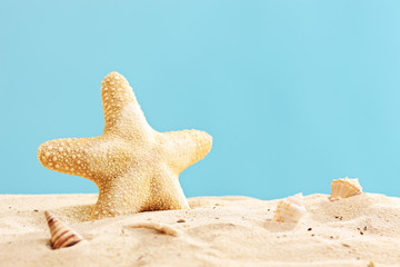 Studio shot of a starfish in sand