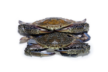 Blue crab on white