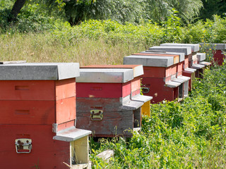 Beehives in field.