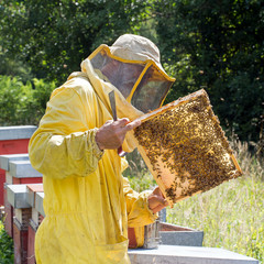 Backlit honeycomb with bees. Apiculture, square crop.