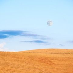 Full moon in the blue sky and the golden field