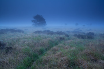 misty marsh in dusk