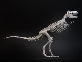 Tyrannosaurus rex skeleton.