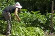 girl gardening