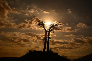 dolunayda ağaçlar